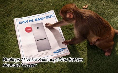 Monkeys Attack-main
