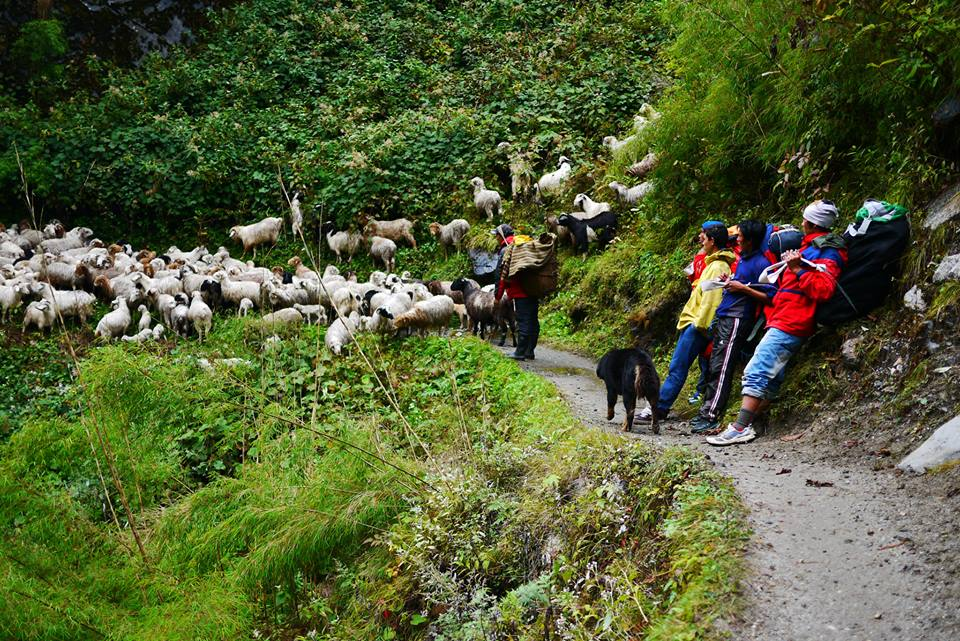 Himalayas Project Team Resing